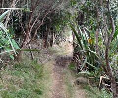 Aroha Island forest walking track