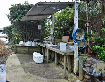 Fish filleting area