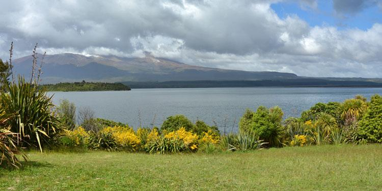 View out over  the lake and Motuopuhi Island
