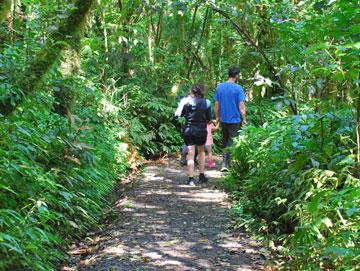 Walking through native bush to the Marokopa Falls