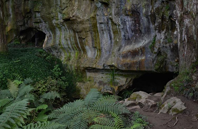 The entrance to the Waipu Caves