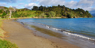 Puriri Bay by the DOC campsite