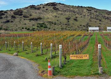 Vineyard, and driveway to the powered sites