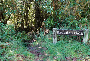 Broads Track is accessed from a rest area on SH6, roughly halfway between Westport and Inangahua. Freedom camping is allowed for self-contained motor caravanners.