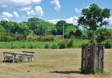 Picnic table in the grassed area of the reserve