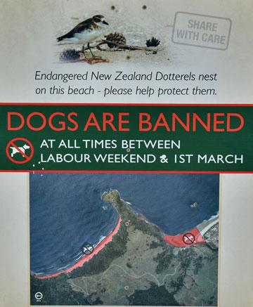 Dogs banned over summer