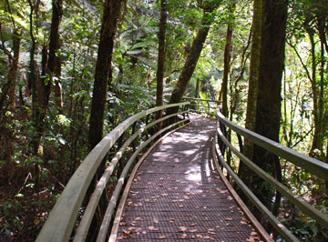 Puketi Forest walking track